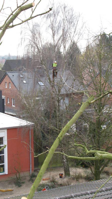 Garten Und Landschaftsbau Mönchengladbach baumpflege fällungen gärtnerei schmitz mönchengladbach garten